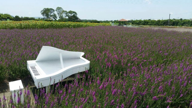Lavender Fields Grand Piano Qiaolin's Studio Keyboard Lessons Singapore
